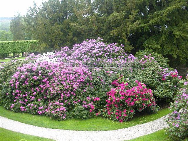 Schloss Ehreshoven Blumensträucher in der Parkanlage