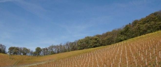 Bungertshof Aussicht